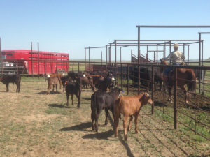 River Watch Beef – Colorado cattle corrals