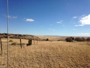 River Watch Beef – Colorado pasture