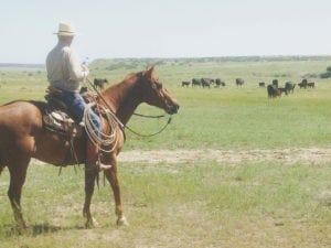 River Watch Beef – Cowboy working horseback