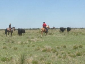 River Watch Beef – Cowboys working cattle in Colorado