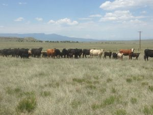 River Watch Beef – Grass-fed Angus and Hereford Beef