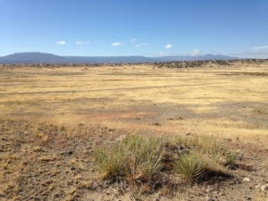 River Watch Beef – Pasture Yucca and Mesa